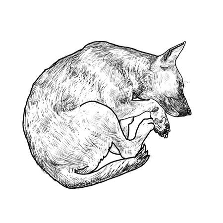 cute dog: Drawing of cute dog sleeping