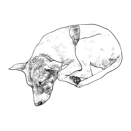 dog sleeping: Drawing of cute dog sleeping