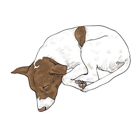 devanear: Desenho de bonito dormindo c