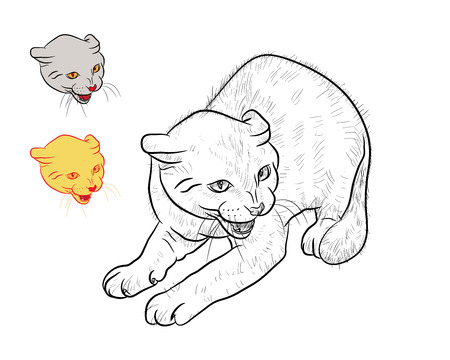 threaten: Drawing of threaten cat  with two separated head on white background