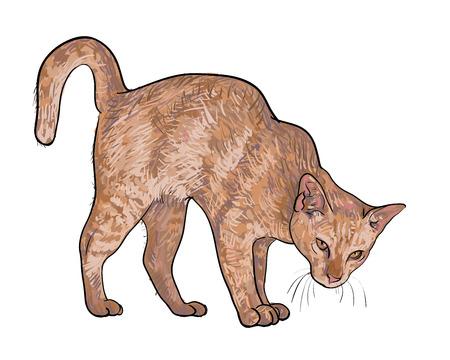 threaten: Drawing of threaten cat on white background