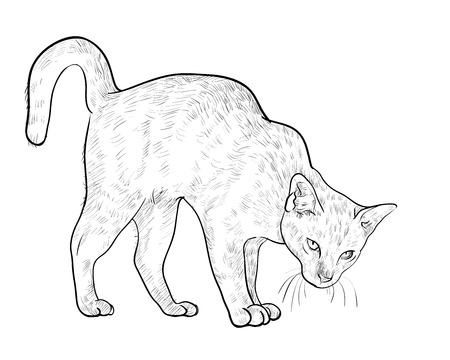 threaten: Drawing of threaten cat on white background