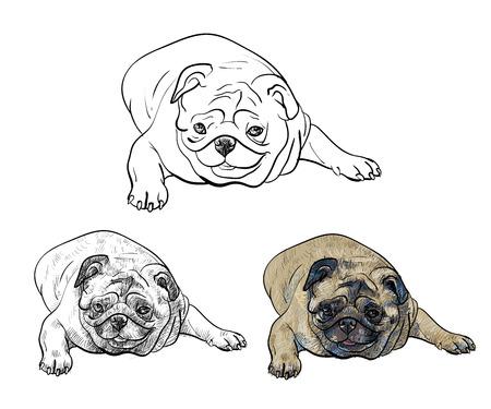 funny dog: Drawing pug dog lying on white background