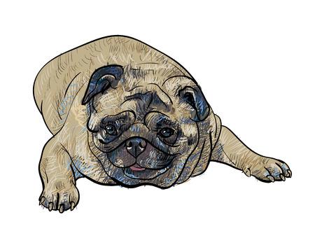 lying: Drawing pug dog lying on white background
