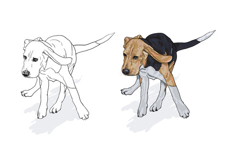 beagle: Drawing of running beagle with shadow on white background,vector illustration Illustration