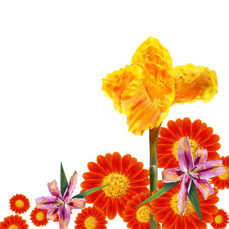 indica: Canna Lily,Mexican sunflower and lily flower on white background with empty space