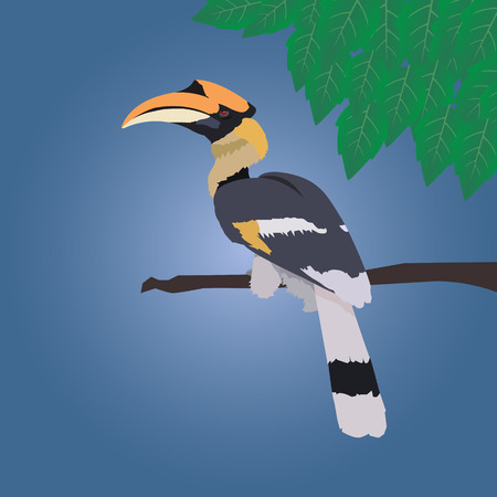 hornbill: Great hornbill stand on the branch on blue background with leaf