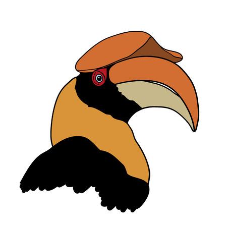 hornbill: Portrait of Great hornbill on white background vector illustration