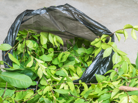 apocynaceae: A pile of cut branch,Wrightia religiosa (Apocynaceae) and climbing ylang-ylang,in garbage bage