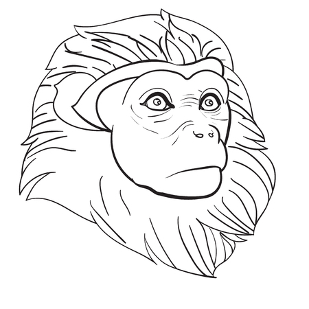 Drawing of monkey head on white background