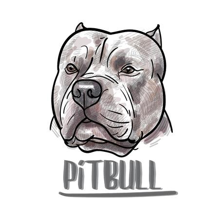 Dibujo de pitbull cabeza sobre fondo blanco, ilustración vectorial