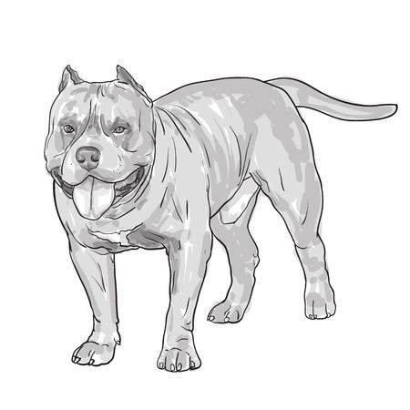 Drawing of pitbull dog isolated on white background,vector illustration
