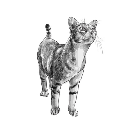 Adorable cat curious staring something,vector illustration