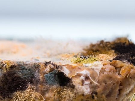 Fungus and mold grow well on sliced bread Stock Photo