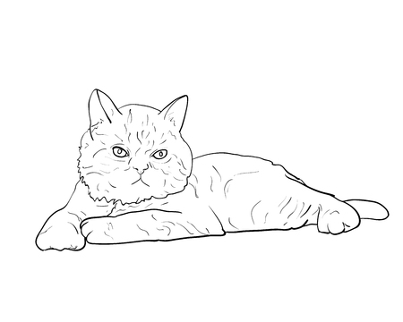 persian cat: Adorable lying persian cat isolated on white background,vector illustration