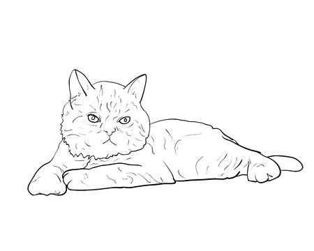 Entzückende liegende persische Katze isoliert auf weißem Hintergrund, Vektor-Illustration Vektorgrafik