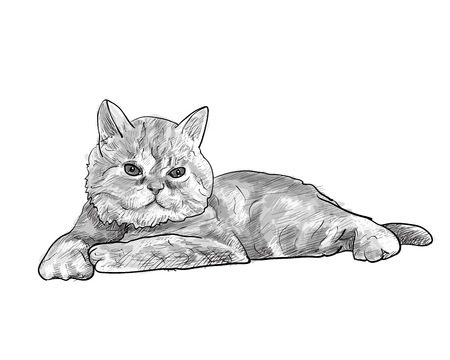 Adorabile gatto persiano giapponese isolato su sfondo bianco, illustrazione vettoriale Archivio Fotografico - 76341697