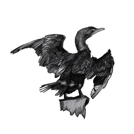 Drawing of Little cormorant bird hold on twig,vector illustration