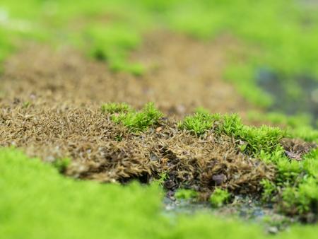 textured wall: Closeup green moss grow on old wall
