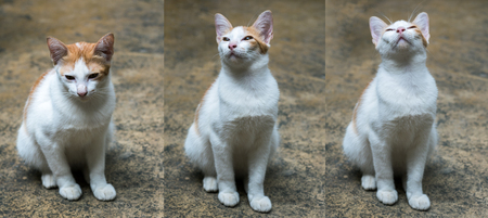 Adorable white cat sitting on cement floor Stock Photo