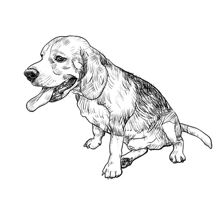 Drawing of adorable male beagle sitting and sticking out tounge on white backgroud Illustration