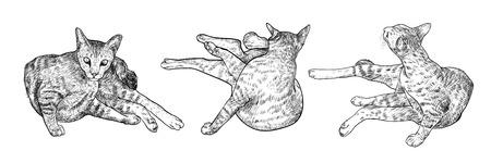 Drawing three poses of cat on white background. Ilustração