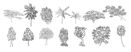 Drawing set of tree on white background,vector illustration
