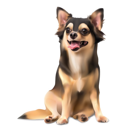 Chihuahua dog on sitting pose vector illustration