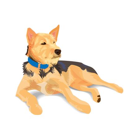 Hybrid brown dog wearing blue collar lying on white background. Ilustração