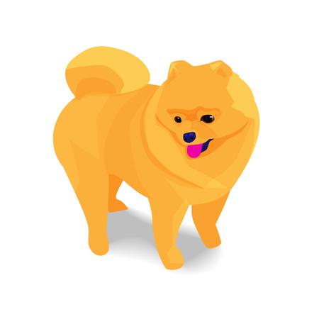 Adorable orange pomeranian dog with shadow on white background, vector illustration