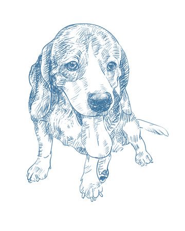 Drawing of adorable beagle, sticking out tongue, sitting on floor,vector illustration