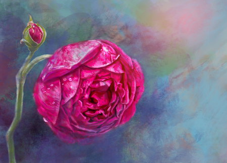 Pink rose with drop on colorful background,digital painting illustration.