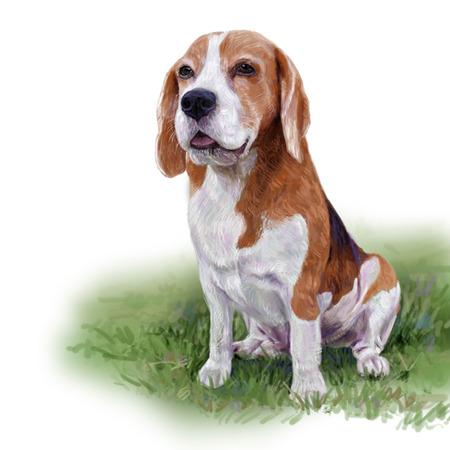 Adorable beagle sitting on green yard,digital painting Stock Photo