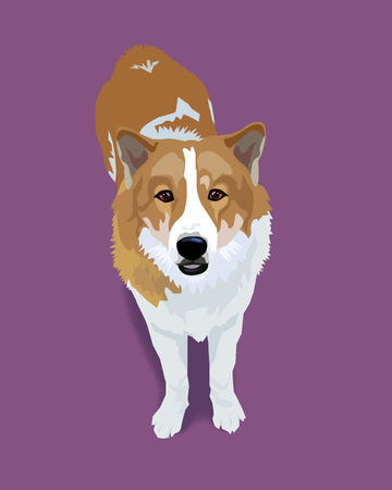 Adorable cuteThai bangkeaw dog with shadow on purple background, vector illustration.