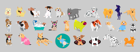 Set of dogs, beagle, jack russell terrier, pitbill, bulldog, Thai bangkaew, dalmatian, adorable and friendly animal on gray background.