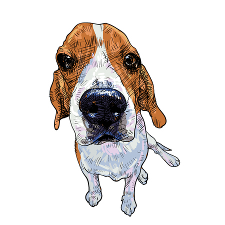 Beagle dog sitting on white background, vector illustration. Ilustração