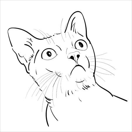 Dibujo retrato de gato está mirando hacia arriba aislado sobre fondo blanco, ilustración vectorial Ilustración de vector