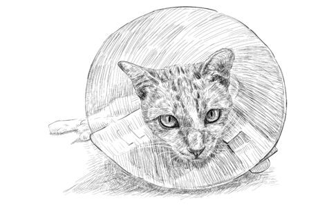 Drawing of a cat wearing a Elizabethan collar prevent scratches and injured bites, stitches, rashes and wounds after sterilization. Vector illustration.
