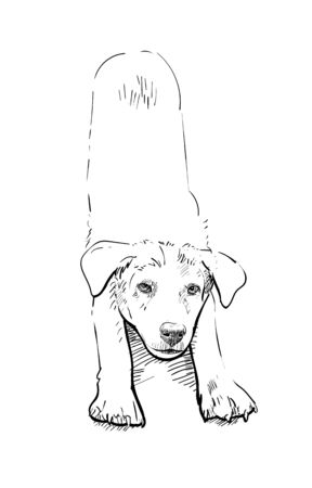 Drawing of dog in stretching pose on white background, vector illustration.
