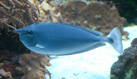 A nice blue fish, side view Stock Photo - 11367841