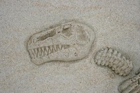 t rex: Gegoten zand contouren van een T Rex Stockfoto
