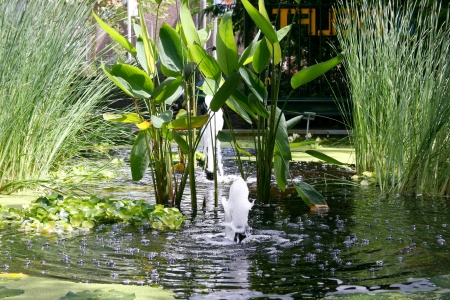 water feature: a small pond with a water feature