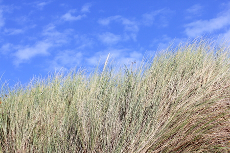 sparse: An dune, overgrown with sparse grass