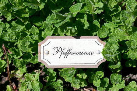 peppermint: Black white small sign for peppermint
