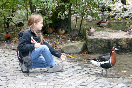 zoo youth: Blonde girl feeding animals in the zoo Stock Photo