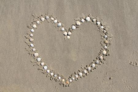 beachcombing: various shells shaped into a heart