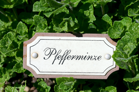 Black, white small sign for peppermint