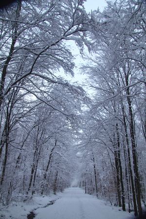 copse: Snowy road through a wintry forest Stock Photo