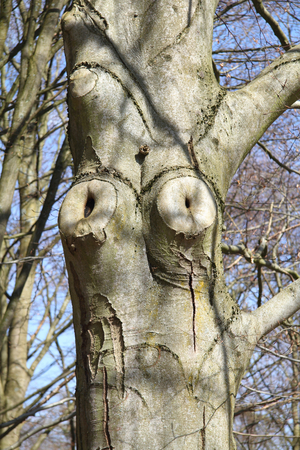 peculiar: a tree trunk with a peculiar deformed excrescences