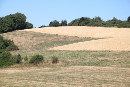 A landscape with wheat fields and forest Stock Photo